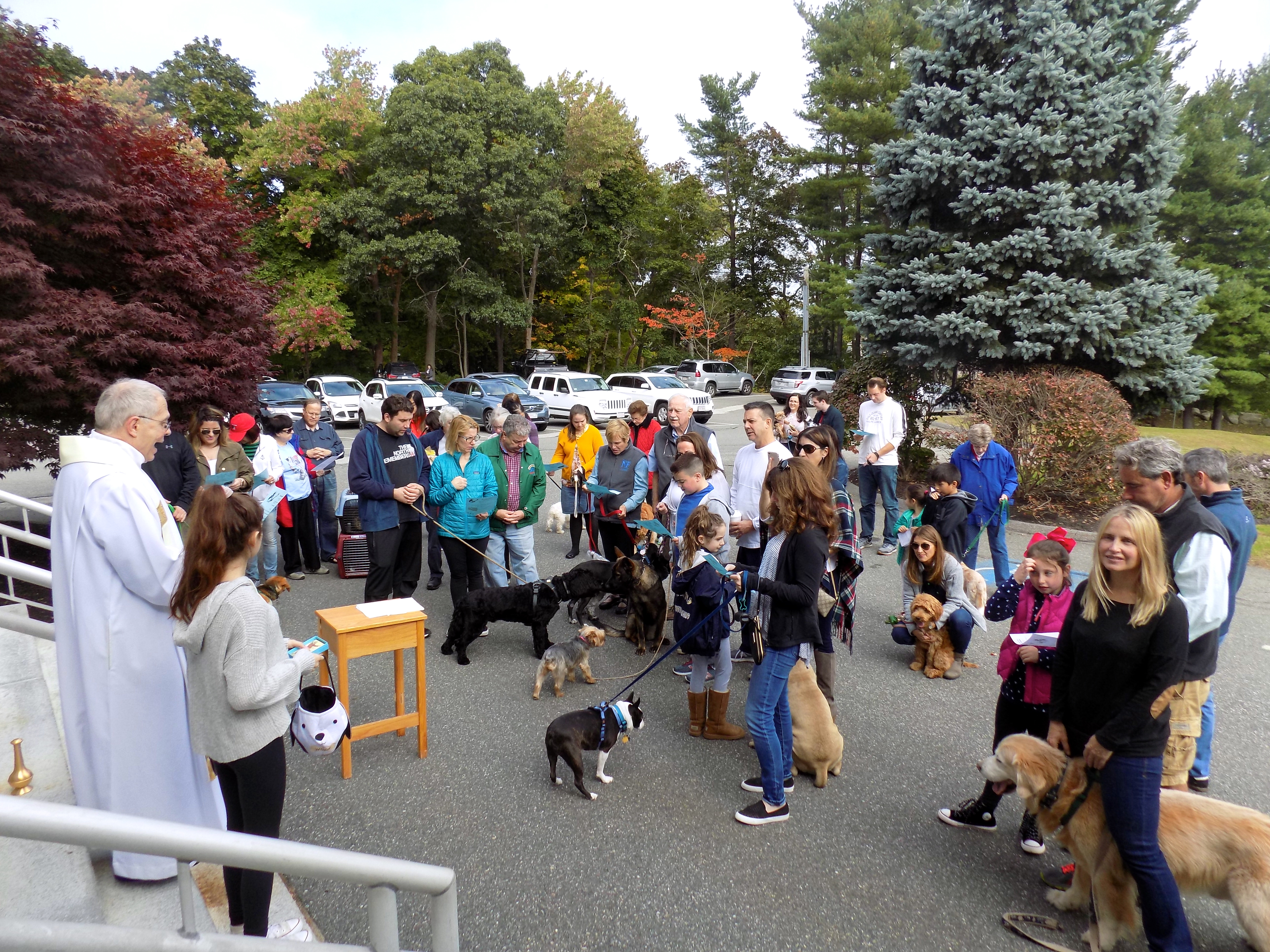Blessing of the Animals at St  Maria Goretti Church